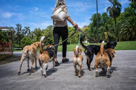 Side Hustle UK Dog Walking